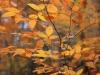 fall-run-park-1