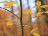 fall-run-park-10-30-2010-6-01-40-pm