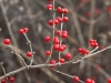 winter-plants-12-4-2011-3-00-37-pm