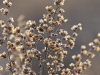 winter-plants-12-4-2011-3-05-23-pm